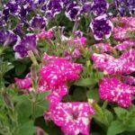 Как и чем украсить сад весной?